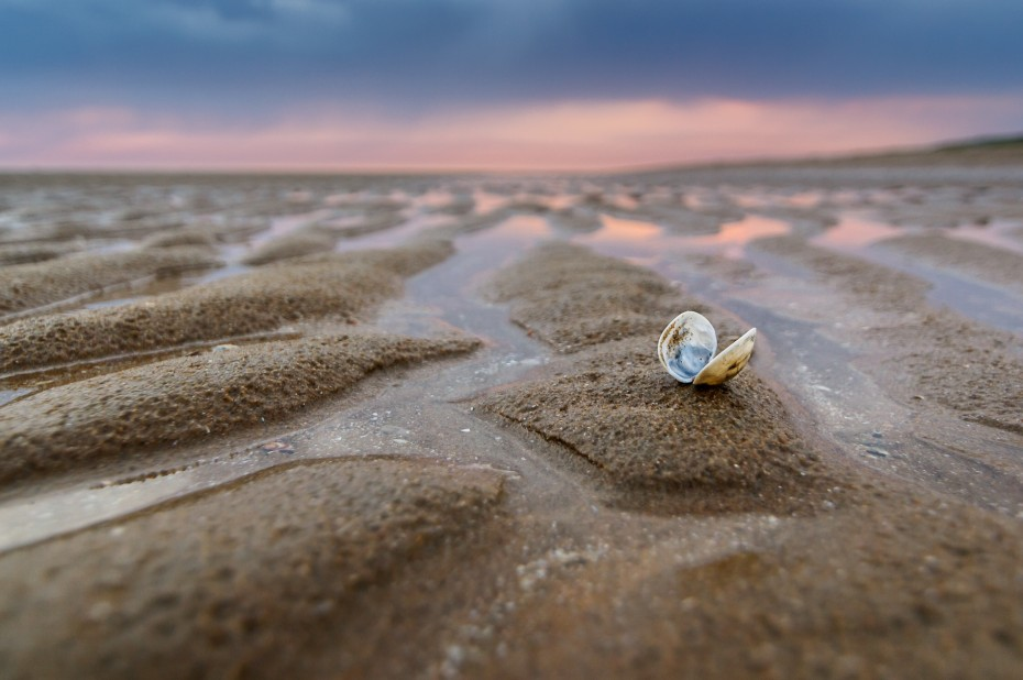 Sea Shells Sanctuary by Martijn van der Nat ISO 800, f3,5, 16 mm, 1/100, handheld