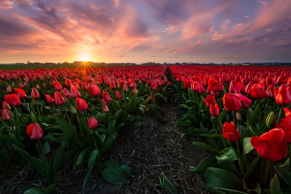 Perennial Red - Martijn van der Nat. ISO 400, 12 mm, f13, 1/25 sec, 0.9 hard grad ND tripod & remote release. The story behind this image on my blog: http://www.martijnvandernat.nl/always-have-a-backup-plan/