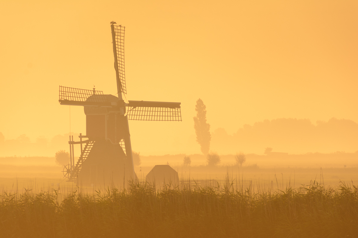 Morning Glory by Martijn van der Nat A lonely windmill in the foggy countryside. The sunlight gives everything a golden glow.