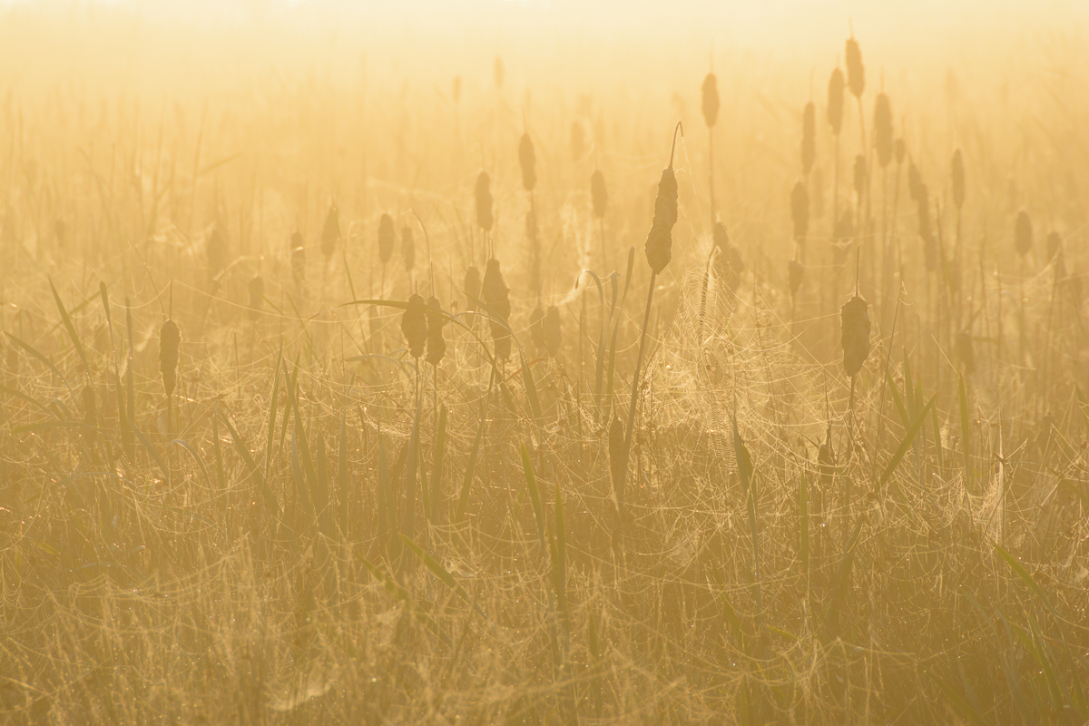 Cob webs in the mist by Martijn van der Nat